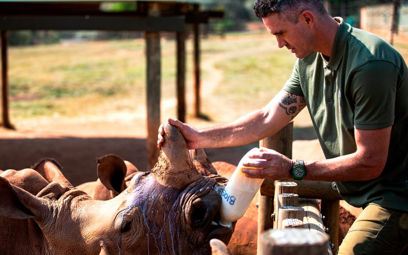 Kevin Pietersen da de beber a un rinoceronte en SORAI