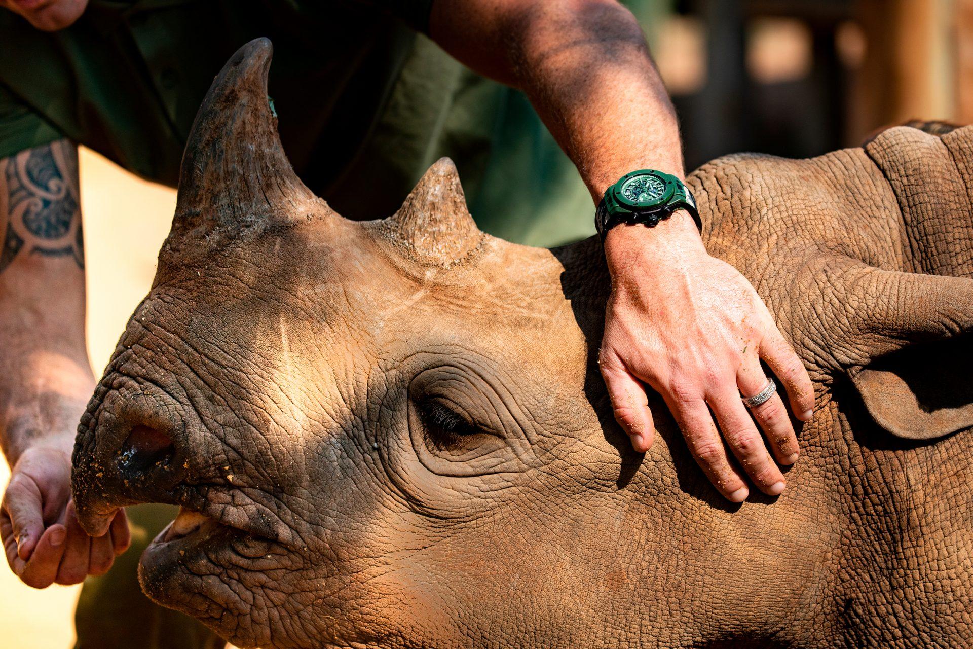 Un joven rinoceronte en la fundación SORAI